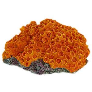 Orange Sun Coral Aquarium Fish Tank Ornament Decoration