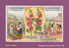 CHROMO LIEBIG : PLANTES TINCTORIALES, LA ROSE TRÉMIÈRE, CUEILLETTE BOSNIE  -P158