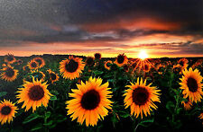 Leuchtbild LED Bild Sonnenblume XXL 60 X 40 Cm