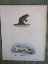 Vintage Print,No.Amer.Porcupine+N orthern Hare,Mammals Natural History of Ny,1842