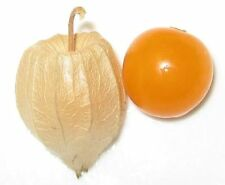 GROUND CHERRY Golden Strawberry Lantern Vegetable Seeds  (10 Nos) R-018
