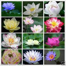 20pcs Mixed Lotus Flower Seeds Combo Pack,Blue,Pink,White,Red,Exotic Lotus Seeds