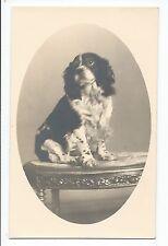 BM977 Carte Photo vintage card RPPC Animaux Chien portrait sur table Coker