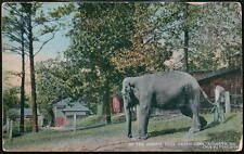 ATLANTA GA Elephant at Grant Park Animal Pens Postcard