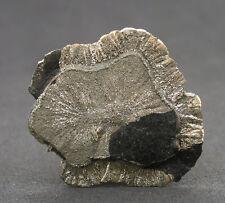 5676 Pyritsonne pyrite sun Sparta Illinois Fund 2009 USA