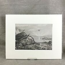1865 Antique Print Seaweed Puffin Beach Landscape Nautical Sea 19th Century