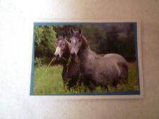Pferde Sticker ein wunderbares Abenteuer Horses incredible Adventure Panini 37