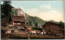 Pilatus. Emsigenalp mit Sennhütten und Vieh. P.Z. vintage photochromie, photoc