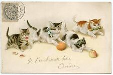 CATS. PETITS JEUX DE CHATS. CHATTONS. KITTENS
