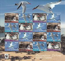 Ascension Island 2011 MNH Red-billed Tropicbird 16v Sheetlet Birds WWF