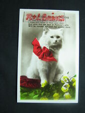 Best Wishes for your Birthday, White Cat with Red Bow, Greeting Postcard, R/P