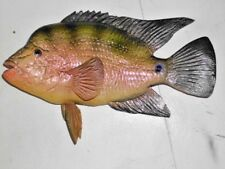 "13"" Cichlid Fish - unpainted fiberglass reproduction blank"