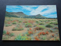 WILDFLOWERS IN THE GLASS GORGE FLINDERS RANGES SA DAISYS SALVATION JANE POSTCARD