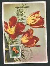 DDR MK 1961 IGA FLORA TULPEN GARTENBAU MAXIMUMKARTE MAXIMUM CARD MC CM d8397