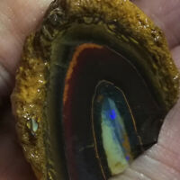 Beautiful NUT 63.95CT +VIDEO Australia Queensland NUT Boulder Opal ROUGH / RUB