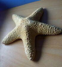 étoile de mer 15 cm