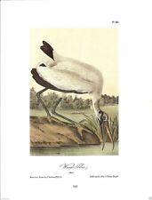 Wood Ibis Vintage Bird Print by John James Audubon