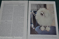1944 magazine article, TOY DOGS, info, history, color art