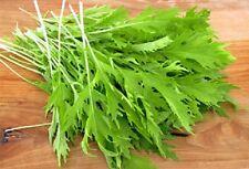 1000 GREEN MIZUNA MUSTARD Japanese Greens Brassica Juncea Herb Vegetable Seeds