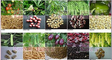 Hybrid Vegetable Seed Kit Cat-2 Kitchen Terrace Top Balcony Gardening Set of 10