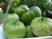100+ Tomatillo Verde Seeds- Heirloom Variety- 2015 Seeds    $1.69 shipping/order