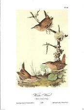Winter Wren Vintage Bird Print by John James Audubon