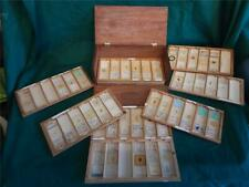 42 Vintage Prepared Microscope Slides in Wooden Box