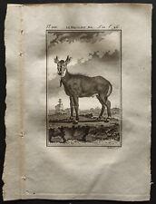 1799 - Buffon - Le Nil-gaut mâle - Gravure zoologie