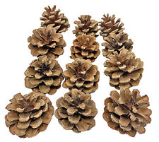 3284 Pk12 Natural Pine Cones Foot Talon Bird Toy Part craft parrot cage amazon