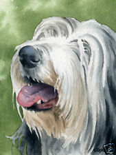 BEARDED COLLIE ART Print Dog Watercolor 8 x 10 by Artist DJR w/COA