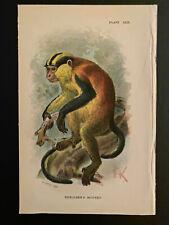 Allen's Nat. Library; Antique Print, Vol II, Pl XXIII, Erxleben's Monkey, 1894