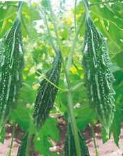 Vegetable seed -Bitter Gourd - Karela Seeds F1