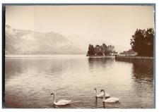 France, Annecy, Île des Cygnes  Vintage citrate print. Tirage citrate  8x11