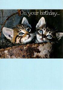 Happy Birthday Blue Eyed Kitten Kittens In A Bucket Hallmark Card