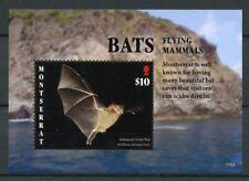 Montserrat 2017 MNH Bats Flying Mammals 1v S/S Bat Wild Animals Stamps