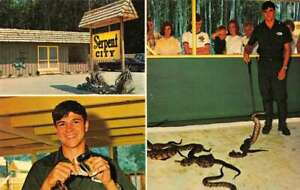 Myrtle Beach South Carolina Sepernt City Snakes Reptiles Postcard AA29900
