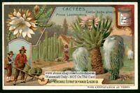 Cactus Desert Flower Blossom Plant c1907 Trade Ad  Card