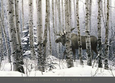 A Walk in the Woods by Stephen Lyman - Moose Art Print Wildlife Poster 36x26