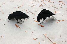 Sale Price Raven Sculpture, Crow Sculpture, Garden Sculpture, Garden Decor