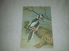 Vintage card Basil Ede Woodpecker Decoupage Bird Great-Spotted Signed Birthday