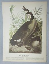 1942 Audubon #201 Canada Goose & #202 Red Throated Loon Full Color Lithograph