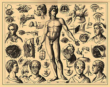 Vintage Medical Print (Picture Poster Art Amputation Human Anatomy Surgery )