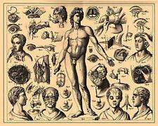 Vintage Medical Print (Picture Poster Art Amputation Human Anatomy Surgery )