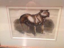 Beautifully Framed Antique Bulldog Print
