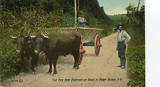 Canada Bear River NS - Hee Haw Express old postcard