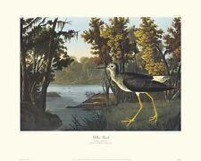 Yellow Shank by John James Audubon Canvas Giclee