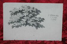 Disegno Antico 1829 Matita Albero con Fronde Bordeaux Rarissimo Famille Lanier