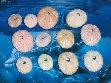 "TWELVE (12) 1 to 2"" PINK SEA URCHINS SEA SHELL BEACH DECOR NAUTICAL TROPIC"