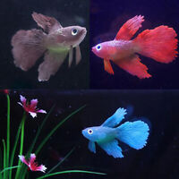 Betta Aquarium Fish Tank Ornament Decor Artificial Soft Silicone GlowingFFB