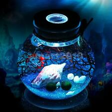 10cm Bottle Jar Hydroponic Terrarium Container Glow LED Light Cork Stopper